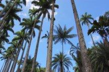 Jardín Botánico de Río de Janeiro